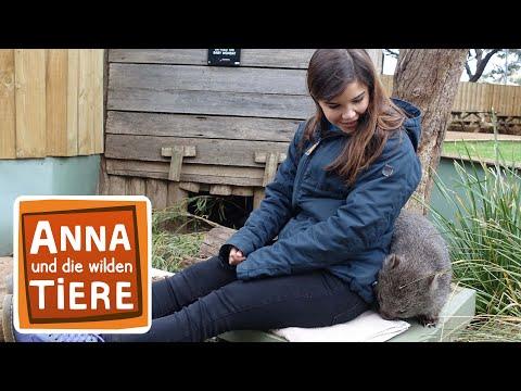 Warum der Wombat