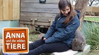 Warum der Wombat Würfel kackt (Doku) | Reportage für Kinder | Anna und die wilden Tiere