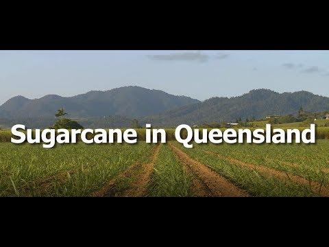 Sugarcane in Queensland - CANEGROWERS