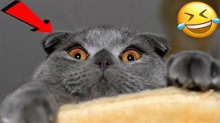 ПРИКОЛЫ С ЖИВОТНЫМИ СМЕШНЫЕ КОТЫ  Приколы 2020 Кошечки юмор собачки