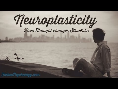 the meaning and importance of neuroplasticity