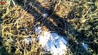 видео: В Приморье сотрудники ДПС задержали егеря, который заподозрил их в браконьерстве в чистом поле