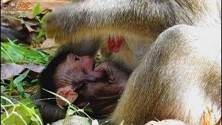 baby monkey angry