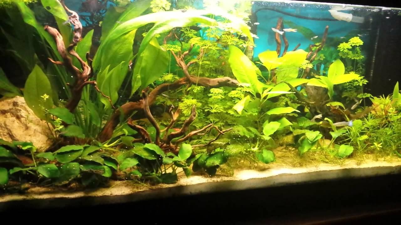 Il mio acquario allestito da 3 mesi con guppy youtube for Fondo per acquario