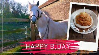 041 ~ [QUOTIDIEN] ~ L'anniversaire d'un cheval !
