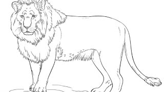 How To Draw a Lion(step by step) | Animal Drawing |