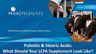 Palmitic & Stearic Acids: What should your fat supplement look like?