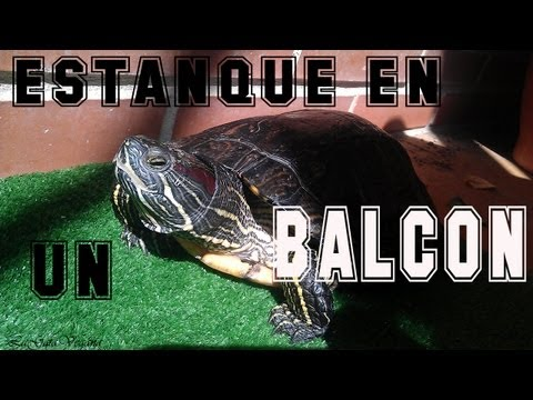Tortuguero casero de jardin tortugas taricayas doovi for Estanque tortugas casero