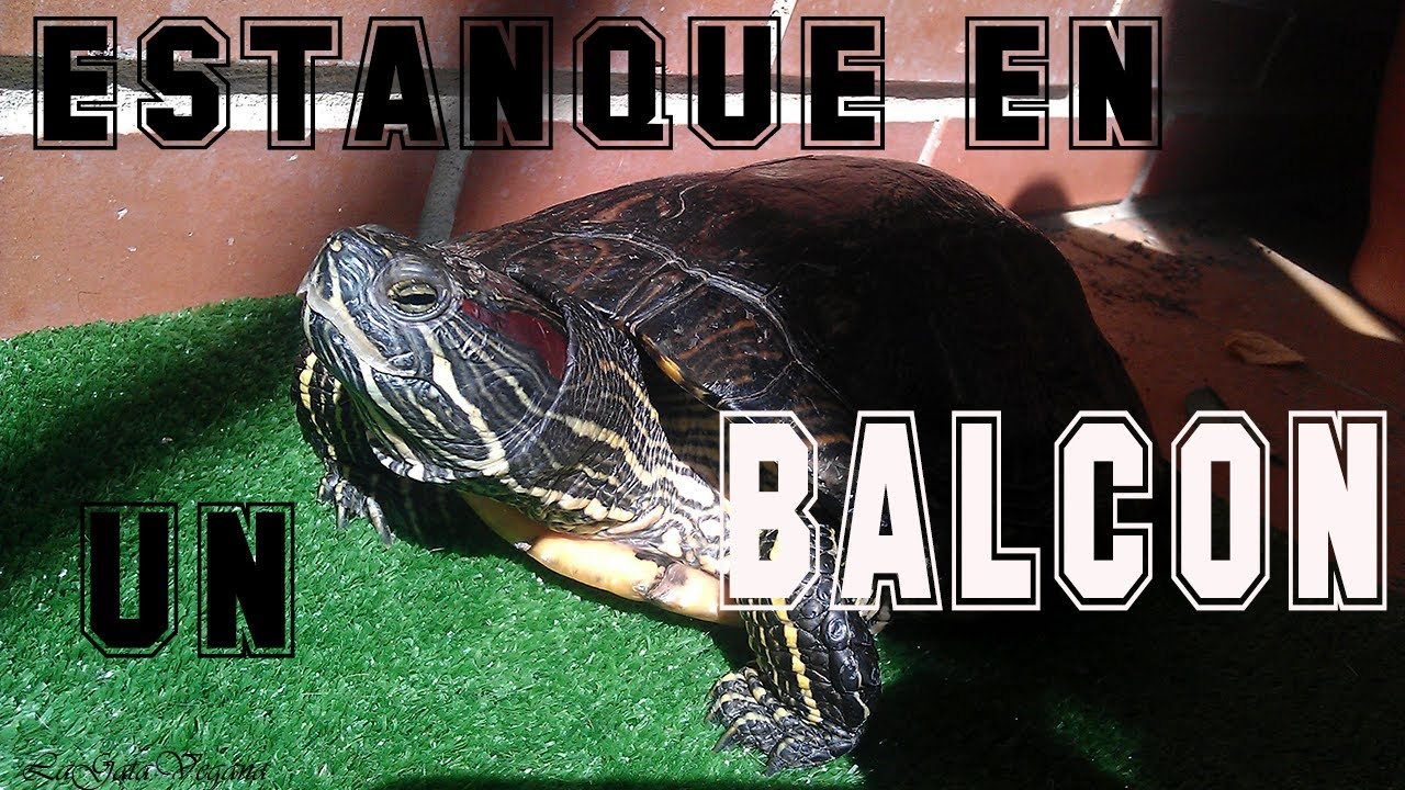 Crear un estanque en un balcon para tortugas solucion for Como construir estanques para peces