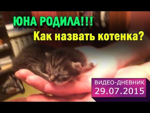 Потап, выставка котов Одесса - YouTube