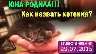 29 июля 2015 // Как назвать котенка? // Видео-дневник