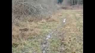 chasse sanglier en creuse par fabrice 2
