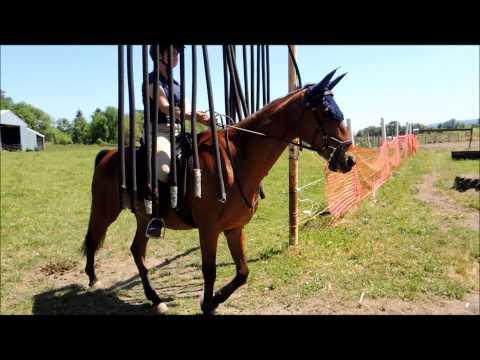 TBEA Trail Horse Clinic: Cowboy Curtain
