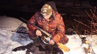 Охота на бобра зимой на приваде