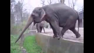 Funny Animals Compilation - Funny Animals Videos Ever- Funny Videos - Funny Animal Videos 5