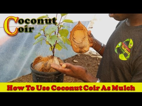 How To Use Coconut Coir As Mulch