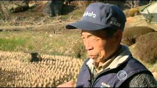 Radiation threatens future of Fukushima farms