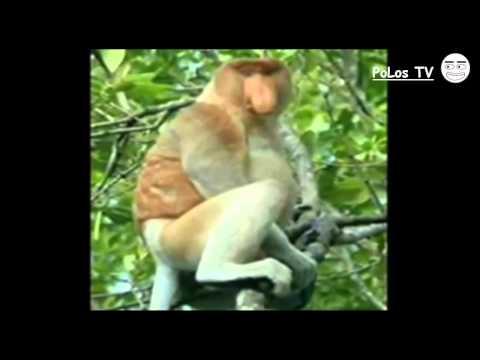 Persebaran Fauna Indonesia