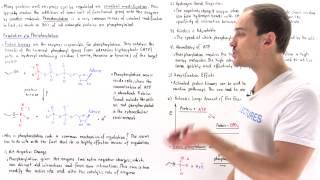 Phosphorylation (Covalent Modification)