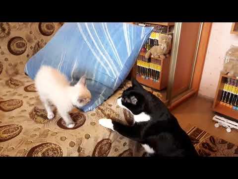 Как приучить кошку к котенку чужому