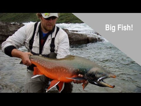 Arctic Char & Lake Trout Fly Fishing Adventure In Northern Canada