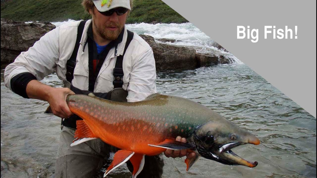 Arctic char lake trout fly fishing adventure in northern for Best fishing in canada