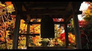 仏教学部1年生・萩本欽一、『ぶっちゃけ寺』でキャパスライフを初告白 7...