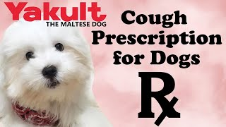 My Furbaby Gets Treatment For Cough   Yakult The Maltese Dog