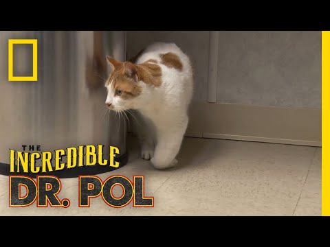 Cat With A Swollen Paw | The Incredible Dr. Pol