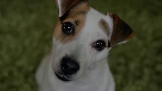 WAGSTA dog health and wellness