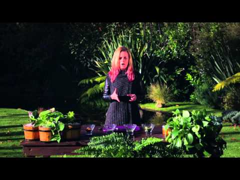 Raw Foodie - ¡Endulza tu vida de manera saludable!