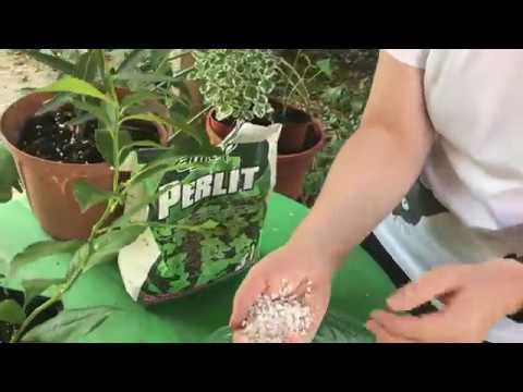 Ce este perlitul si cum ajuta plantele #ingrijireaflorilor