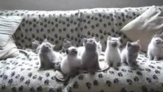 Кошки танцуют.Прикольное видео -про смешных котиков-танцоров.