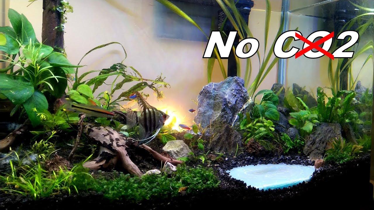 Update 60cm Aquascape - Cara Ganti Air yang Nyaman untuk ...