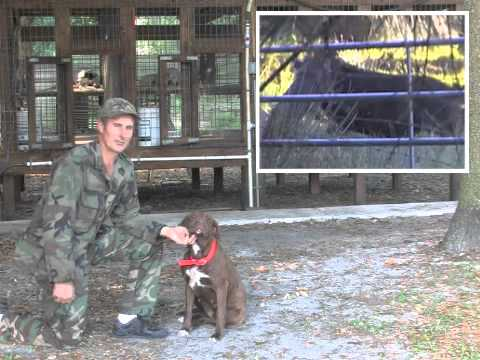 america's-best-trained-&-obedient-catch-dogs