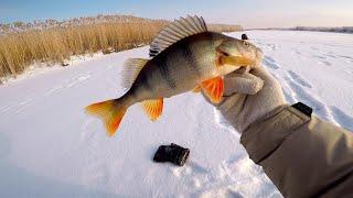 Ловля ОКУНЯ на блесну СС Поиск новых точек Рыбалка на озере