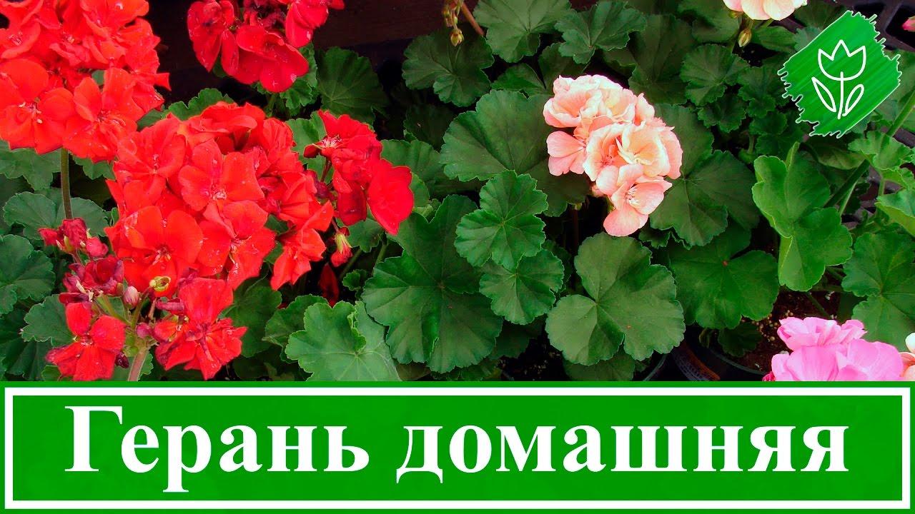 Российские актеры - Кино-Театр. РУ 38
