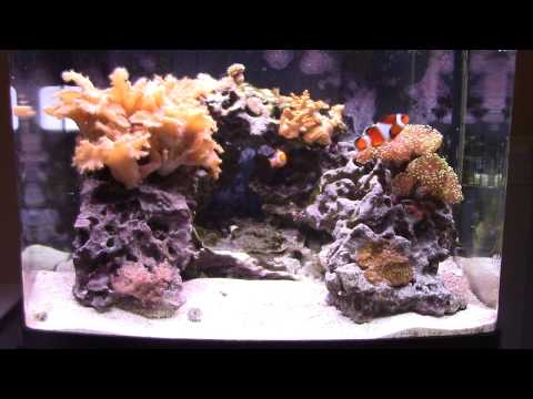 Saltwater Rookie - Biocube 29g - 2 Years Later...