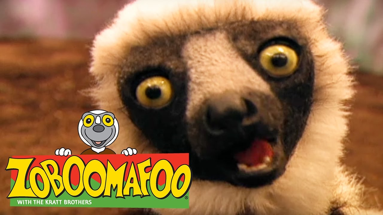 Zoboomafoo 129 Bathtime Full Episode Kids Tv Shows Youtube