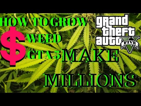 HOW TO MAKE MILLIONS WEED FARM GTA V!!!!