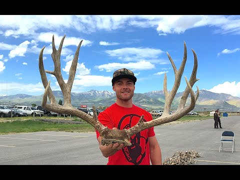 ANTLER AUCTION | WHAT HAPPENS TO ALL THE ANTLERS?