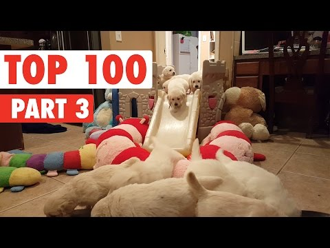 Top 100 Best of The Year 2016 Part 3