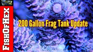 First Update On The 200 Gallon Frag Tank