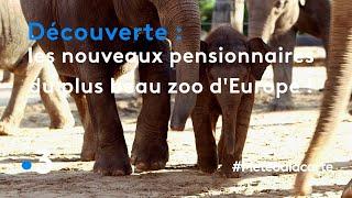 Les nouveaux pensionnaires du plus beau zoo d'Europe ! - Météo à la carte