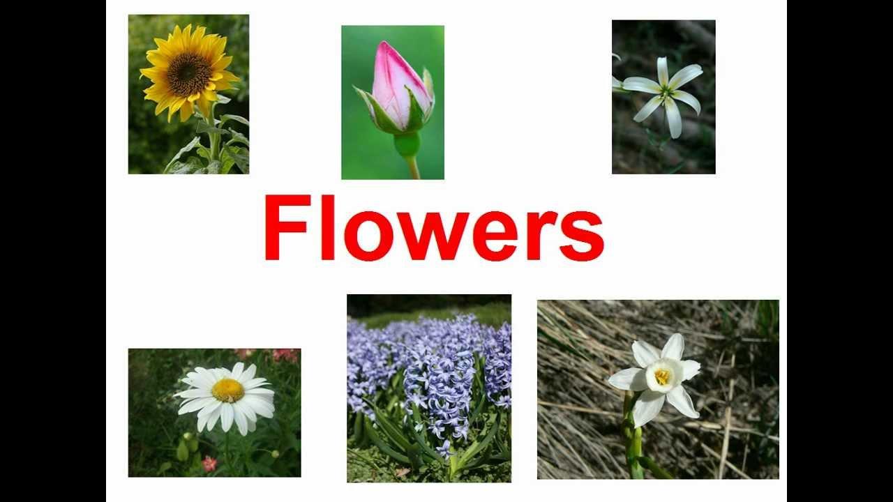 Flowers for kids youtube for Nombres de arboles en ingles