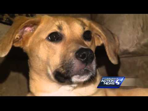Dog rescued from trash enjoys second chance at life
