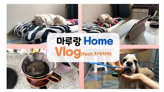 코카스파니엘 강아지 마루의 집 vlog/코고는 강아지/…
