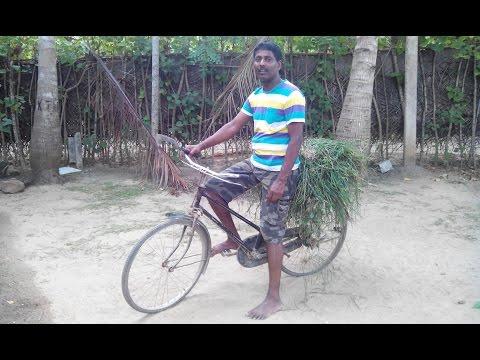 Siruppiddy village Sri Lanka சிறுப்பிட்டி   வடக்கு கிராமம்