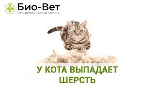 У кота выпадает шерсть. Ветеринарная клиника Био-Вет.