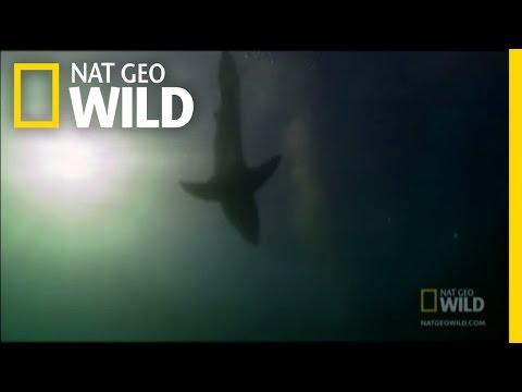 Decapitation by Shark | Nat Geo Wild